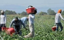 Al via l'indagine nazionale ANCI-Ministero del Lavoro su disagio abitativo e lavoro agroalimentare